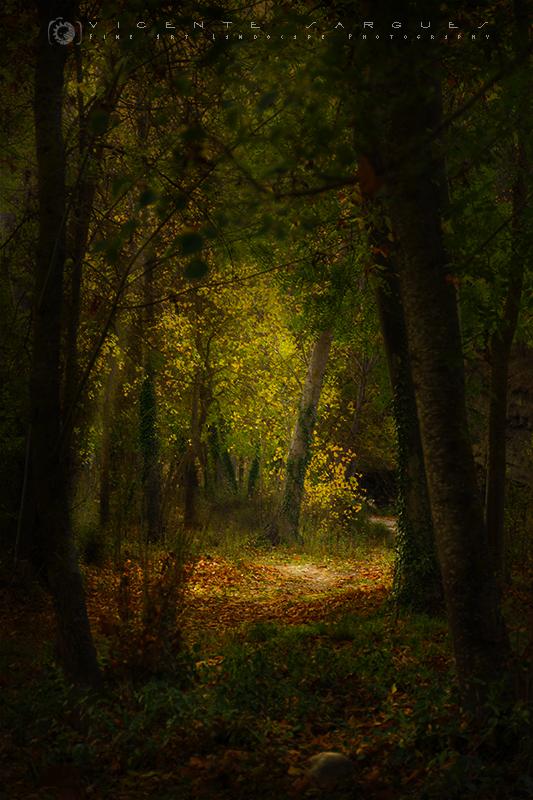 Pasaje en el bosque