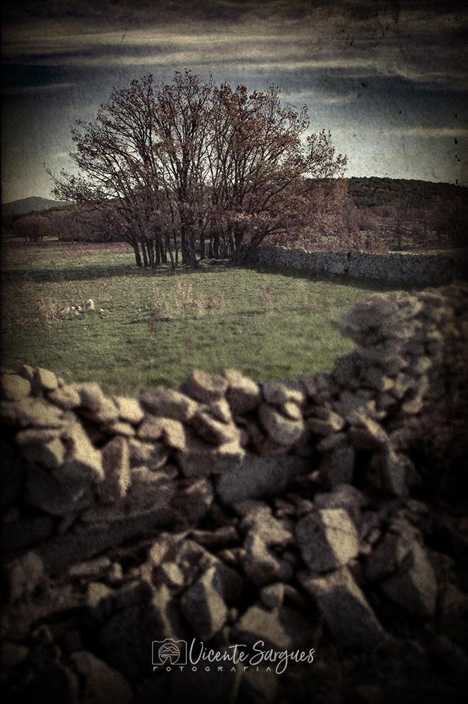 Árboles tras un cercado