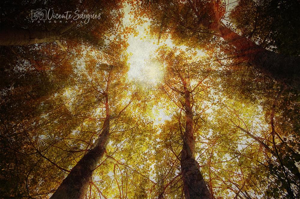 Copas de árboles