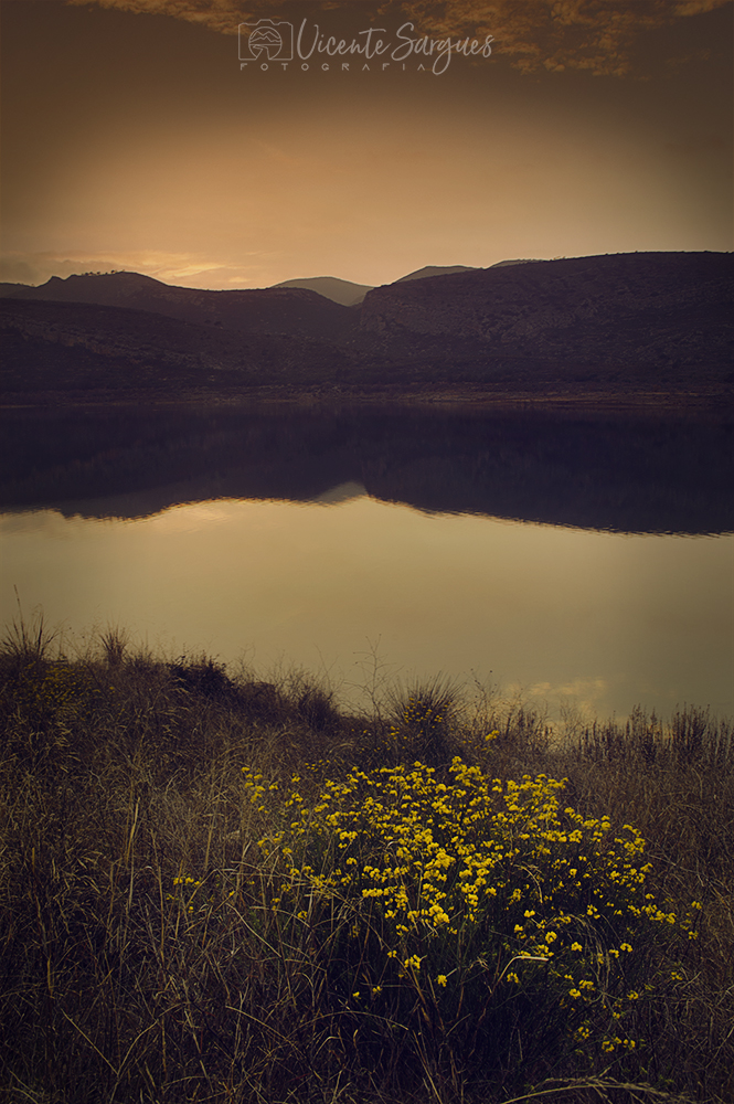 Flores junto al lago