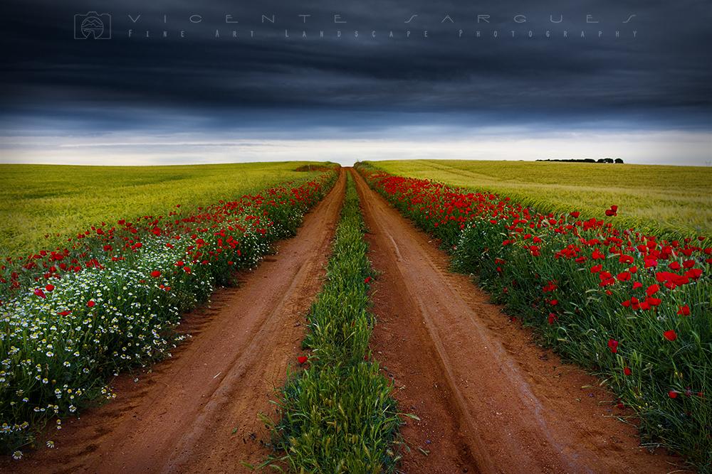 Camino entre flores